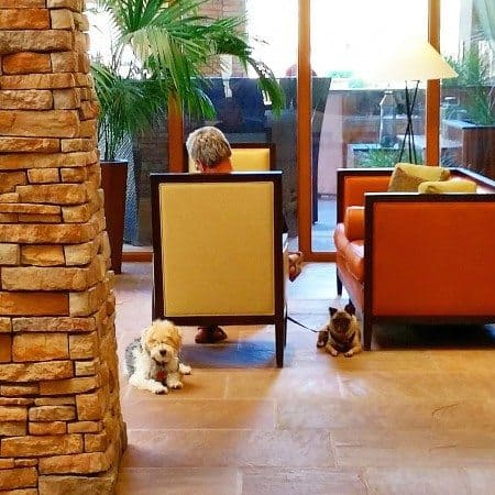 Pet friendly resorts in Phoenix