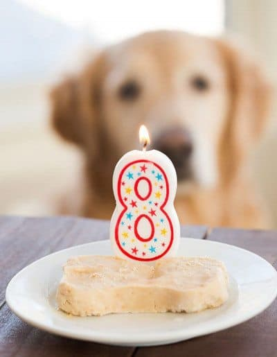 Spoiled Dog Cake Recipe • Love From The Oven