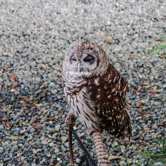Ketchikan Wildlife
