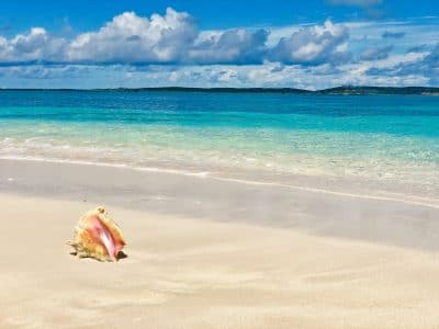 Beach in Caribbean with sand and turquoise water with a conch shell sitting on beach