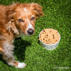 Picture of a dog next to a bowl of peanut butter dog treats