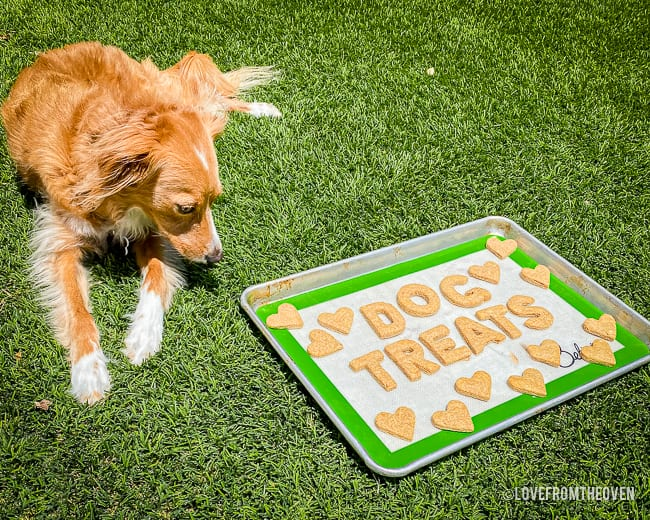 Dog lying next to a tray of homemade peanut butter dog treats