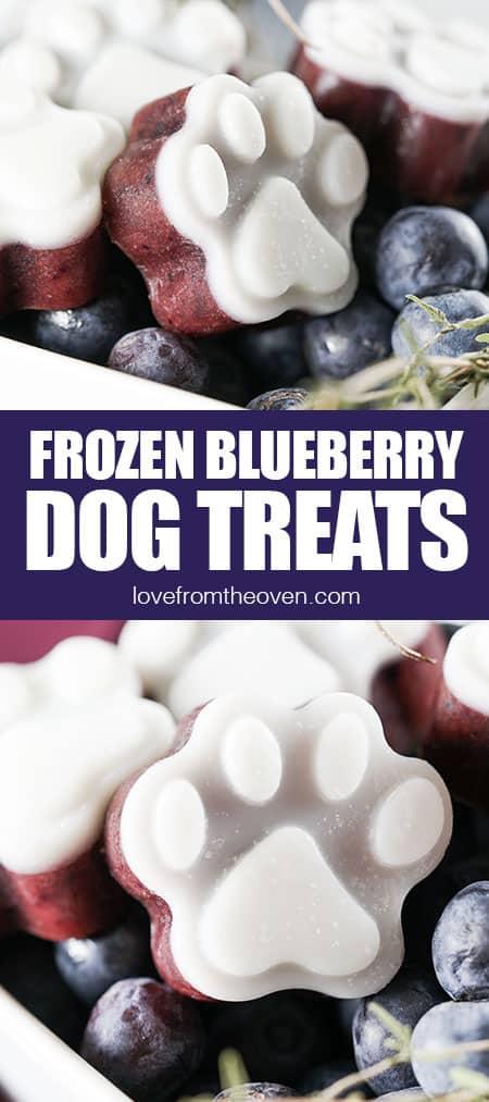 photos of frozen blueberry dog treats