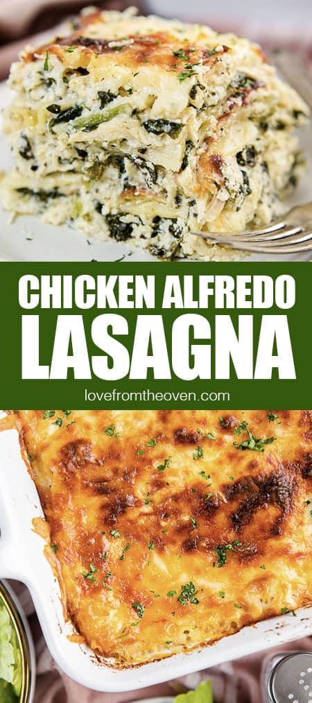 chicken alfredo lasagna photos