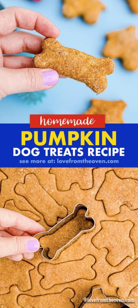 photos of pumpkin dog treats